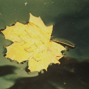 a yellow leaf floats on a river, with handwritten text on it.